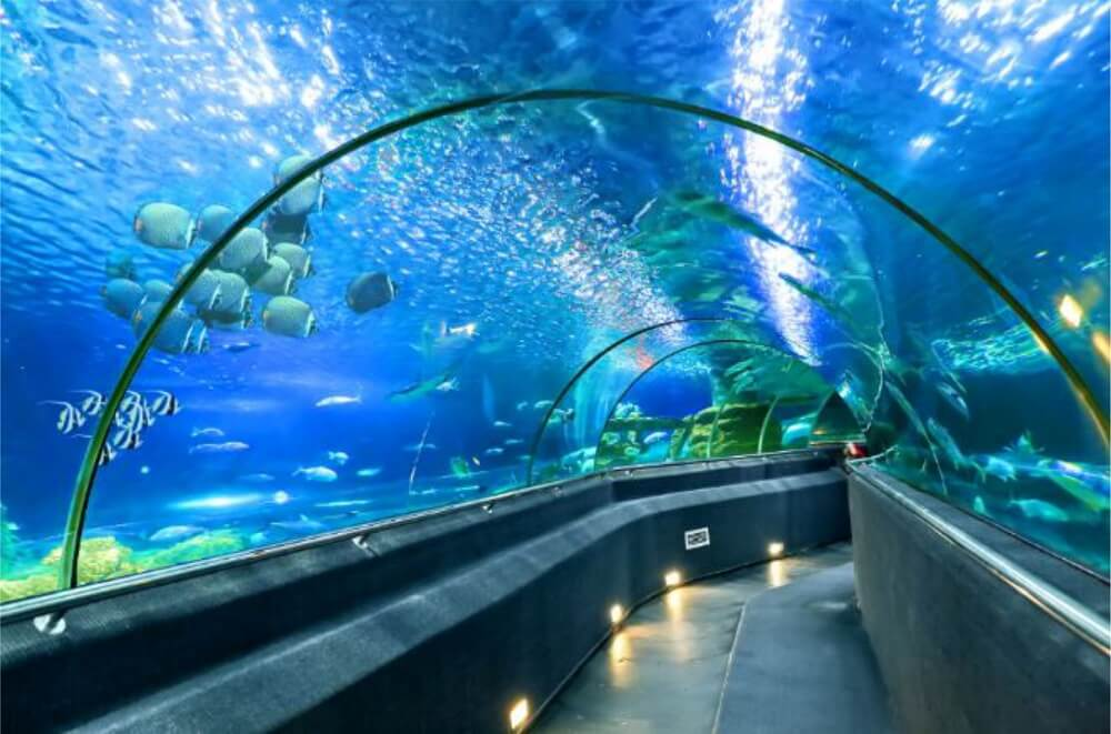 Du lịch đến Vinpearl Phú Quốc có gì hấp dẫn?
